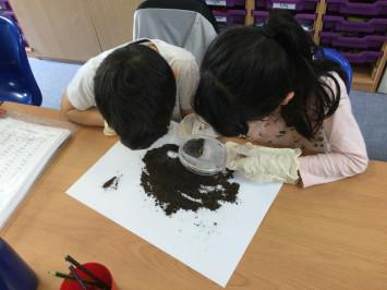 Soil Detectives in 3R