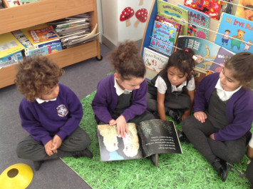 RB learn about nocturnal animals